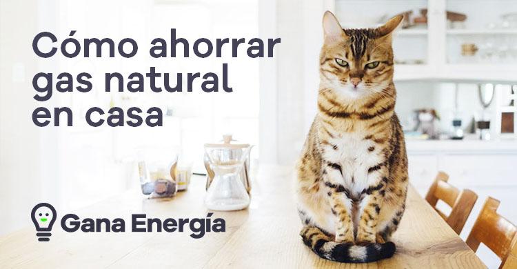 Cómo ahorrar gas natural en casa: 14 Medidas a tener en cuenta